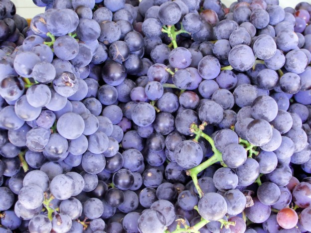 grapes-01642